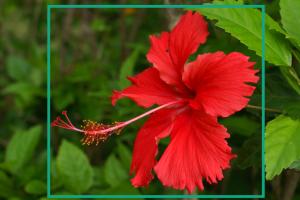 Reconnaissance espece fleur