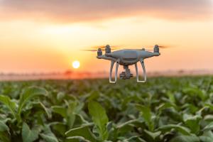 Les drones et l'intelligence artificielle, meilleurs alliés des agriculteurs ?